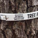 Tree Admin